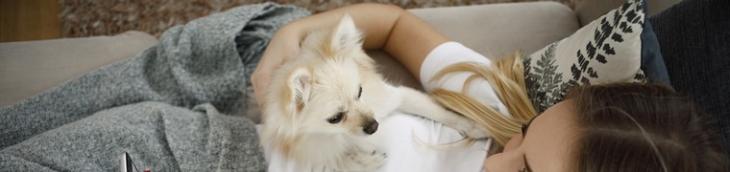 Animaux de compagnie : les Français prêts à dépenser plus pour leurs bêtes