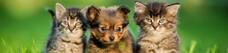 français chats chiens