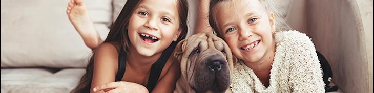 Les dépenses santé pour les animaux de compagnie