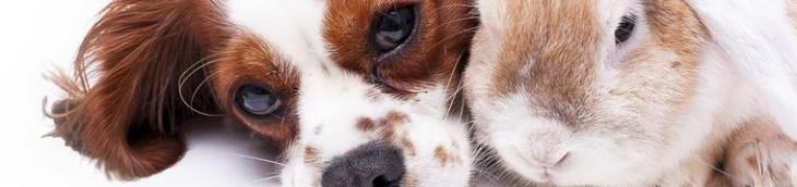 Le budget consacré par les Français à leurs animaux de compagnie ne cesse de grimper