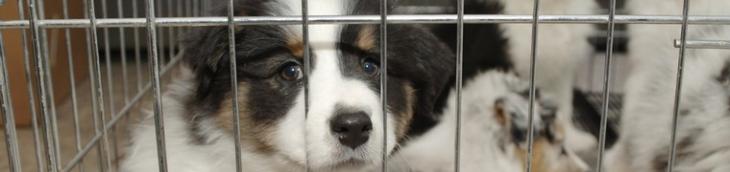 Les chats et les chiens ne sont plus vendus dans les animaleries en Californie et en Grande-Bretagne