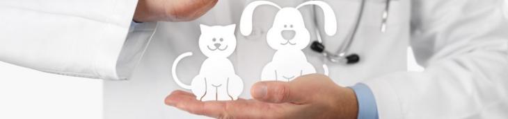 Le CHU Vétérinaire des Animaux de Compagnie se développe davantage