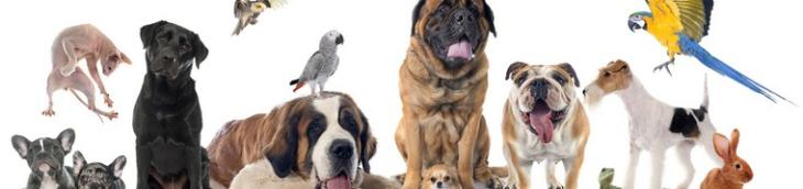 La commercialisation d'animaux d'élevage est désormais interdite aux États-Unis