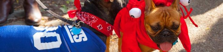 Le défilé canin sur la place Tompkins a failli être annulé pour contrainte financière