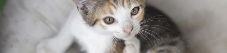 Les dispositifs anti-puces pour chiens peuvent se révéler mortels pour les chats