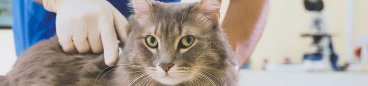 Étude Que Choisir : des tarifs des soins vétérinaires très hétérogènes