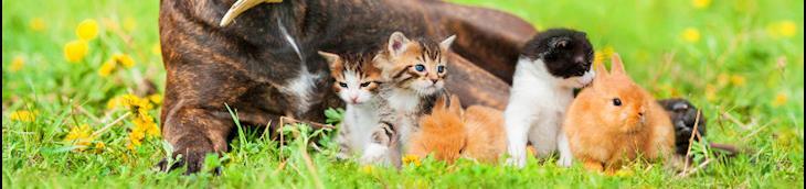 La loi sur la cruauté envers un animal enfin appliquée