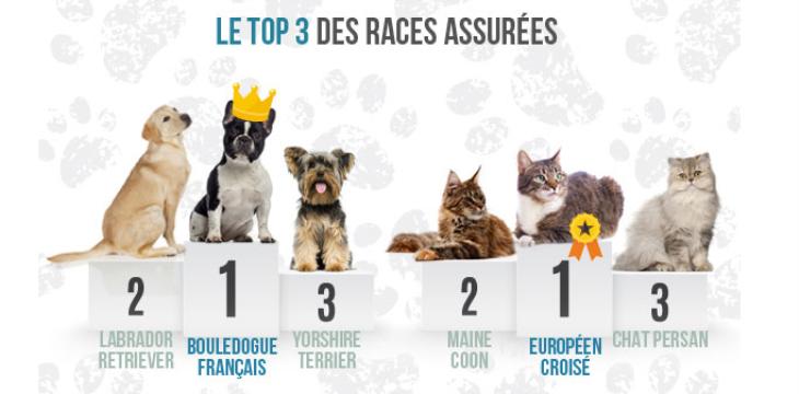 Assurance chien selon la race