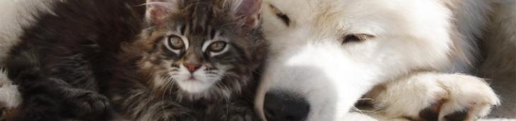 Résiliation mutuelle animaux