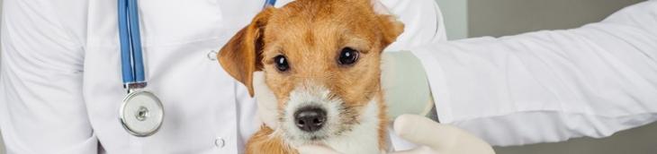 Souscrire une assurance pour animaux, la solution pour couvrir des dépenses de santé en hausse