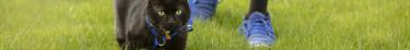 Sera-t-il bientôt illégal de laisser sortir son chat ?