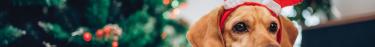 Les animaux de compagnie passent Noël comme les enfants