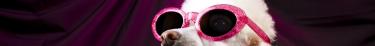 Les animaux-stars d'Internet peuvent générer des fonds conséquents pour les bonnes causes