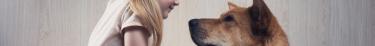 Les chiens sont prédisposés à comprendre le langage humain