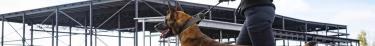 Les chiens se tournent systématiquement vers leurs maîtres face à un problème insoluble