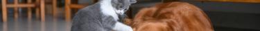 Collaborer avec des influenceurs pour lancer des offres d'assurance dédiées aux animaux domestiques