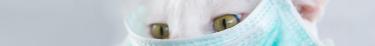 Le Covid-19 ne se transmet pas à travers les animaux domestiques