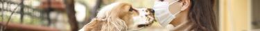 Le dispositif spécial confinement de la SPA a profité à plusieurs centaines d'animaux de compagnie