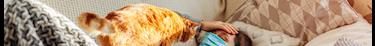 Des études montrent que les chats peuvent contracter le coronavirus de différentes manières