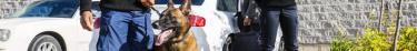 L'expérience menée avec le premier chien d'assistance judiciaire en France est concluante