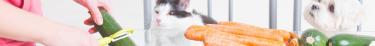 L'extension du véganisme aux animaux domestiques continue de faire débat