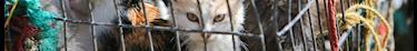 Le gouvernement renforce les mesures contre la maltraitance animale