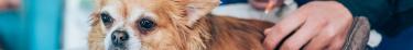 De moins en moins d'euthanasies sur les animaux sont recensées aux États-Unis