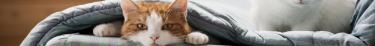 La non-identification d'un chat est désormais passible d'une amende