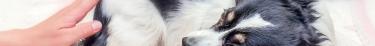 Des scientifiques finlandais ont étudié l'anxiété chez les chiens