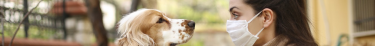 La SPA a obtenu une dérogation de sortie pour l'adoption d'animaux durant le confinement