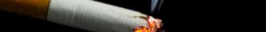 Le tabac est aussi nocif pour les humains que pour les animaux de compagnie