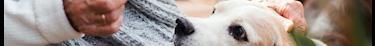 Vicanis prend la garde des chiens des seniors après leur mort