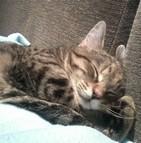 Assurance pour chat de gouttière