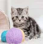 L'assurance pour chat d'intérieur