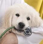 Assurance chiot (mutuelle santé)