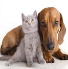 garanties mutuelles animaux