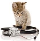 remboursements assurance animaux