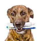 assurance chien bâtard