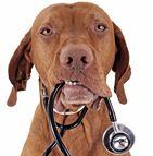 Assurance pour chien de concours