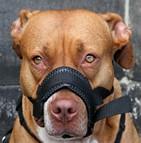 Mutuelle chien dangereux