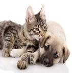 garantie assurance animaux