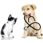 Mutuelle chien chat France