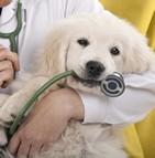 Prix des soins vétérinaires en France