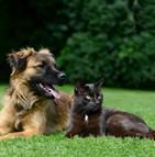Profil des animaux assurés