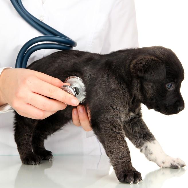 Test ADN sur animaux