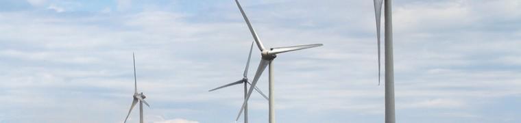 Les éoliennes auraient-elles des impacts négatifs sur la santé des animaux ?