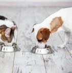 Une épidémie de typhus canin sévit à Charleroi