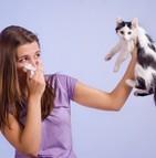 Allergie aux chats : une nouvelle piste de vaccin prometteuse