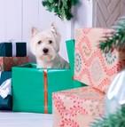 L'animal de compagnie est-il un présent de Noël idéal ?