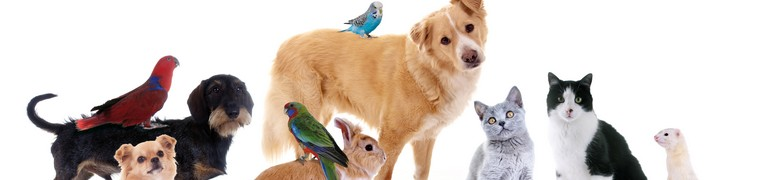 Voyager en transports en commun avec son animal domestique